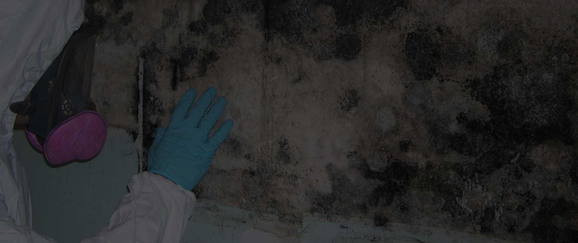 mold remediation philadelphia